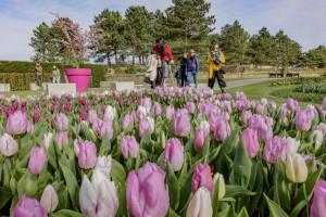 De bezoekers konden de gehele periode genieten van een ware bloemenpracht. © Keukenhof
