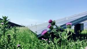 De zonnepanelen zorgen ook voor meer biodiversiteit. © Grunneger Power