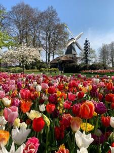 De bloeiende tulpen zijn nu toch virtueel te zien. © Keukenhof