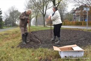 Vrijwilligers plantten de bloembollen 'coronaproof.' © Peter Panneman